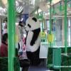 panda-tram